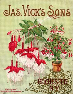 Seed Catalogs from Smithsonian Institution Libraries Vintage Diy, Vintage Labels, Vintage Cards, Vintage Postcards, Shabby Vintage, Posters Vintage, Vintage Prints, Seed Art, Seed Catalogs