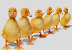 Help your writers develop a business plan. A Novel Creation: Getting those Crazy Ducks in a Row