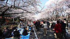 Ueno Park - famous for the many museums found on its grounds - ess. Tokyo National Museum, National Science Museum and Ueno Zoo.