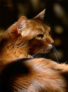 """The cat was created when the lion sneezed."" --Arabian Proverb"