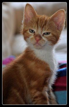 libellule kitty