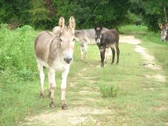 how can you not love donkeys?