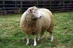 Today marks the 20th anniversary of the announcement of Dolly the sheep, the first mammal cloned from an adult cell...2/22/2017