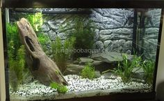55 Gallon Aquarium Tank