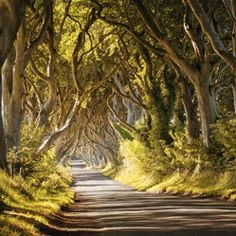 Check out discussion Dark Hedges at https://500px.com/groups/popular-photography/192809/dark-hedges