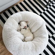 The major breeds of bulldogs are English bulldog, American bulldog, and French bulldog. The bulldog has a broad shoulder which matches with the head. Puppies And Kitties, Cute Puppies, Cute Dogs, Doggies, Cute Dog Beds, Cute Baby Animals, Animals And Pets, Funny Animals, Wild Animals