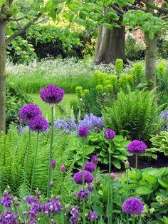 Alliums, ferns, hostas, aquilegia, foxgloves and euphorbia.