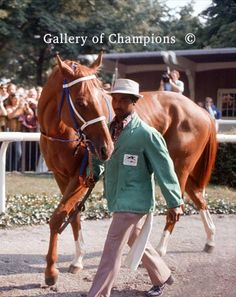 Secretariat 1973 Belmont Stakes Paddock Photo #124...Big Red ...such a horse... considered to be the greatest race horse