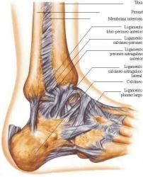 Reflexiología podal - Monografias.com Muscle And Nerve, Reflexology Massage, Medical Anatomy, Muscle Anatomy, Nerve Pain, Anatomy And Physiology, Biochemistry, Human Anatomy, Health Remedies