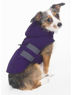 Fashion Pet Hooded Parka for Pets, Small, Purple ^^ Special dog product just for you. See it now! : Dog Apparel and Accessories Hooded Parka, Parka Coat, Small Dog Accessories, Pet Coats, Dog Itching, Dog Training Pads, Dog Shedding, Dog Diapers, Humor