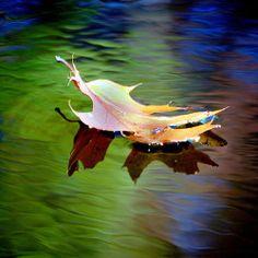 ensphere:  Floating Fall Leaf…