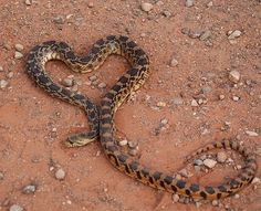Beware of any 'snake' touting love signs. The bite could be deadly. Heart In Nature, Natural Born Killers, Heart Images, Love Symbols, Crowley, Love Heart, Heart Art, Photos, Pictures