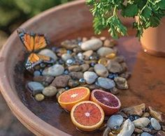 49 Inspiring Butterfly Garden Design Ideas - HOOMDSGN Inspiring Butterfly Garden Design Ideas 20 In modern cities, it is sort of impossible to stay in a very house with your . Diy Gardening, Gardening For Beginners, Organic Gardening, Vegetable Gardening, Container Gardening, Garden Types, Butterfly Garden Plants, Planting Flowers, Butterfly Feeder