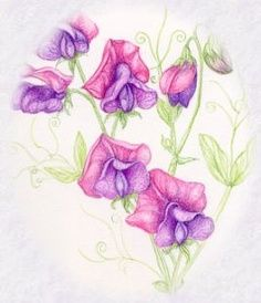 Sweet Pea also April birth flower Sweet Pea Flower Pictures, Sweet Pea Flowers, Bild Tattoos, Dog Tattoos, Animal Tattoos, Tatoos, Sweet Pea Tattoo, Sweet Tattoos, Tattoo Designs For Girls