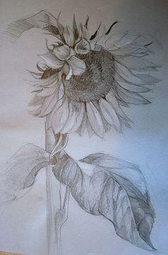Wildflower Drawing, Sunflower Drawing, Sunflower Art, Sketchbook Drawings, Pencil Art Drawings, Sketching, Flower Sketches, Art Sketches, Familie Symbol