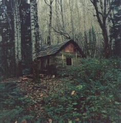 Reminds me of the cabin Miranda Moore was held captive in THE HUNT// What happened here when Birdy was a girl...changed her life forever.