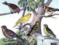 Instant Art - FANTASTIC Bird Print - The Graphics Fairy Natural History Bird Print Circa 1879