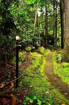 Guide My Path Print By Lj Lambert http://fineartamerica.com/products/guide-my-path-lj-lambert-art-print.html