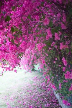 Hello Spring, Scenery, Plants, Animals, Flower, Pink, Flowers, Animales, Landscape