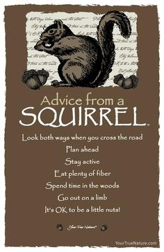 Spirit animal totem advice from a squirrel. Animal Spirit Guides, Spirit Animal, Power Animal, Advice Quotes, Wisdom Quotes, Life Quotes, Daily Quotes, All Nature, True Nature