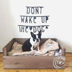 Don't Wake up the Dog!   - This is the New Basket of Lola from Holland ► http://www.bterrier.com/?p=30289 - https://www.facebook.com/bterrierdogs