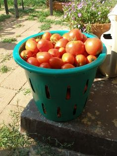 Thy Hand Hath Provided: Preserving Tomatoes: Part 1
