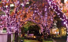 Tokyo. Shinagawa.Megurogawa illumination.