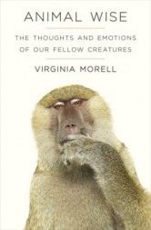 Book Review: Animal Wise – The Thoughts and Emotions of Our Fellow Creatures