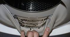 Comeperogni altro elettrodomestico,anchela lavatriceha bisogno di una pulizia e manutenzione regolare.Quindi, senotidelle stranemacchie scure trale guarnizioni o nella vaschetta del detersivo, oppure se il bucato pulito comincia ad avere un cattivo odore, probabilmente è giunto il momento di pulire la tua lavatrice. Tieni presente che, oltre ad effettuareun cattivo lavaggio, la lavatrice in queste condizioni potrebbe contenere un fungo nocivo alla nostra salute. Le condizioni…