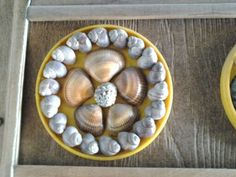 sockets of shells for decoration