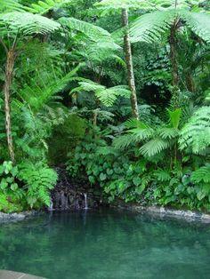Tropiical Garden -- Como Shambhala Estate