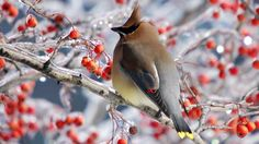 National Geographic Backyard Birding website - An excellent source of information about birds!