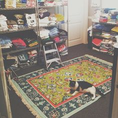 We got a new rug in the workshop and Reesey seems to love it haha! #livetolove