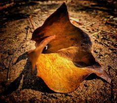 Love a dead leaf. #Explore_Macro #macro_mood #macro_highlight #_stop_and_stare #igworld_nature_ #exceptional_pictures #igbellus #nature_brilliance #lovelydeadcrap #igw_macro #majestic_macros #fingerprintofgod #olloclipmacro #leaf #olloclipmacro #iphone6s #beaniedee