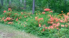 Arboretum Mustila, Elimäki.