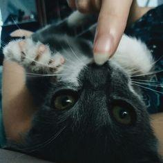 Очередная ми-ми-мишная проделка от нашей котейки...  #Cat #Kitty #Кот
