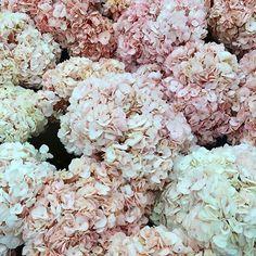 LOVE hydrangeas!! This Is Glamorous.... Pink