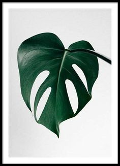 Monstera one Poster in the group Posters & Prints at Desenio AB (8720)