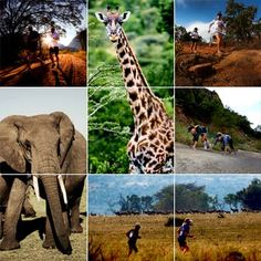 """The Big Five Marathon- It's a marathon you literally run through  South African Savannah with Elephants, Rhinos, Buffalos, Lions and Leopards...OH MY! It says """"No fences, no rivers, nothing at all separates the runners from the African wildlife."""""""