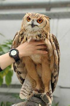 Do Owls Really Have Long Legs : really, Ideas, Beautiful, Birds,