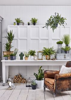 Our SS17 houseplants collection. From cacti and succulents to foliage and more.