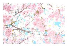 Pink Cherry Blossoms Spring Nature Photography by LovesParisStudio, $10.00