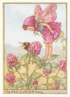 antique Red Clover Flower Fairy print