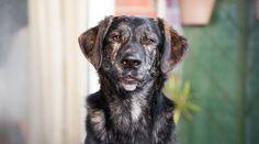 Australian Shepherd Mix, Drawing Practice, Wolves, Cute Dogs, Pets, Google, Image, Animals, Dog Breeds