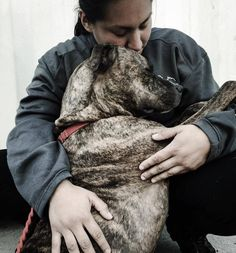 Physically abused dog returned 11 times This is so sad, wish I could have her