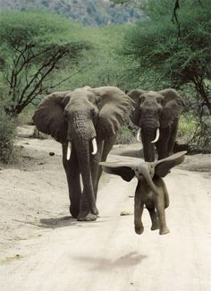 Baby elephant - love it Animals And Pets, Baby Animals, Funny Animals, Cute Animals, Baby Elephants, Elephants Photos, Wild Animals, Baby Hippo, Animal Funnies