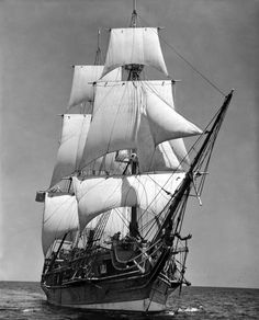 This picture is representing naval supplies for the New England colonies as a specializtion (SPELLING -- SPECIALIZATION).