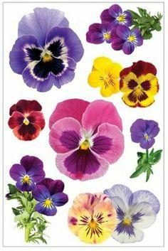 Pansies Sticker at hobby lobby Watercolor Cards, Watercolor Flowers, Watercolor Paintings, Pansy Tattoo, Flower Tattoos, Flower Pictures, Botanical Art, Vintage Flowers, Pansies