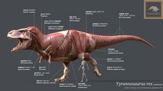 ArtStation - Tyrannosaurus Rex Anatomy , Vitamin Imagination Shiva Tandav, Anatomy Models, Animal Anatomy, Tyrannosaurus Rex, In Ancient Times, Zbrush, Prehistoric, Creatures, Artist