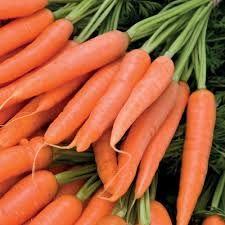 My vegetable garden: carrots